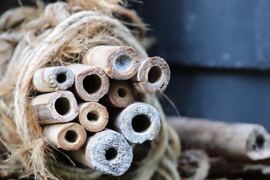 Nestverschluss Maskenbiene