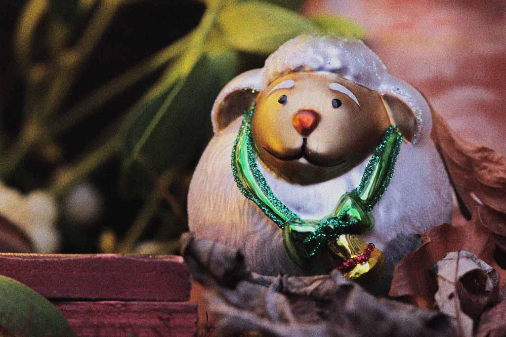 Weihnachtsgeschichte Schaf