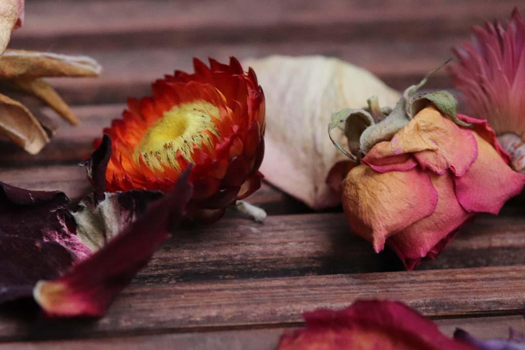 getrocknete Strohblumen