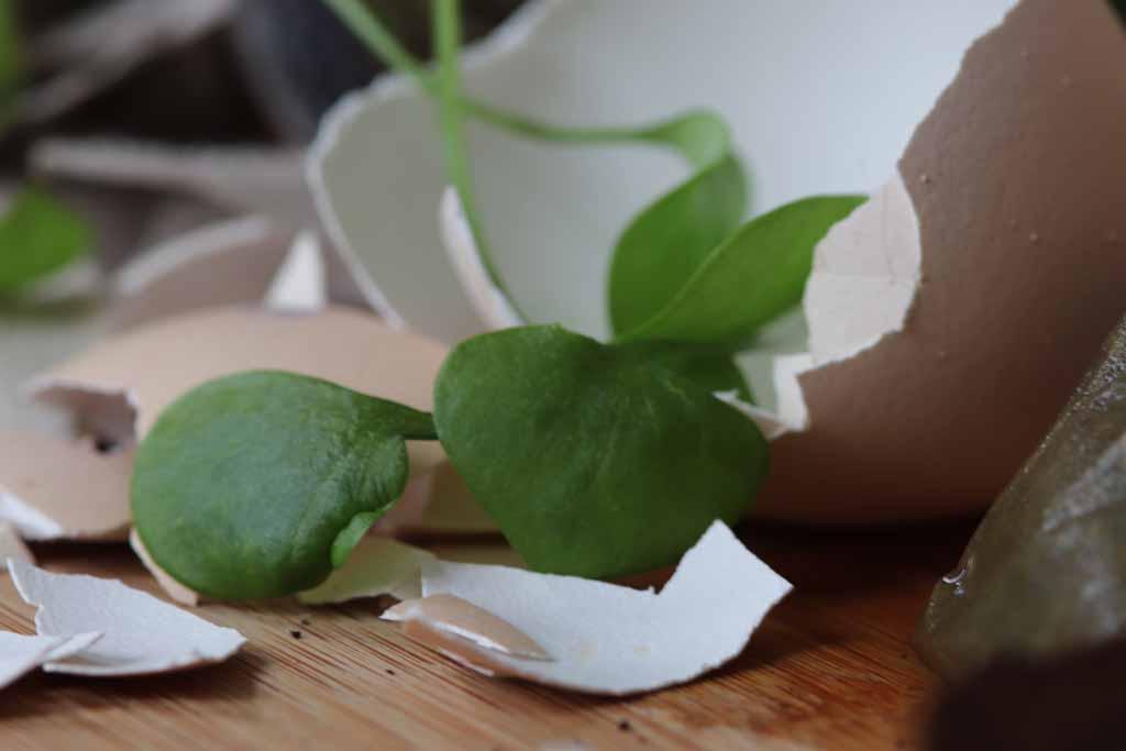 Eierschale und Salatreste zum Kompostieren